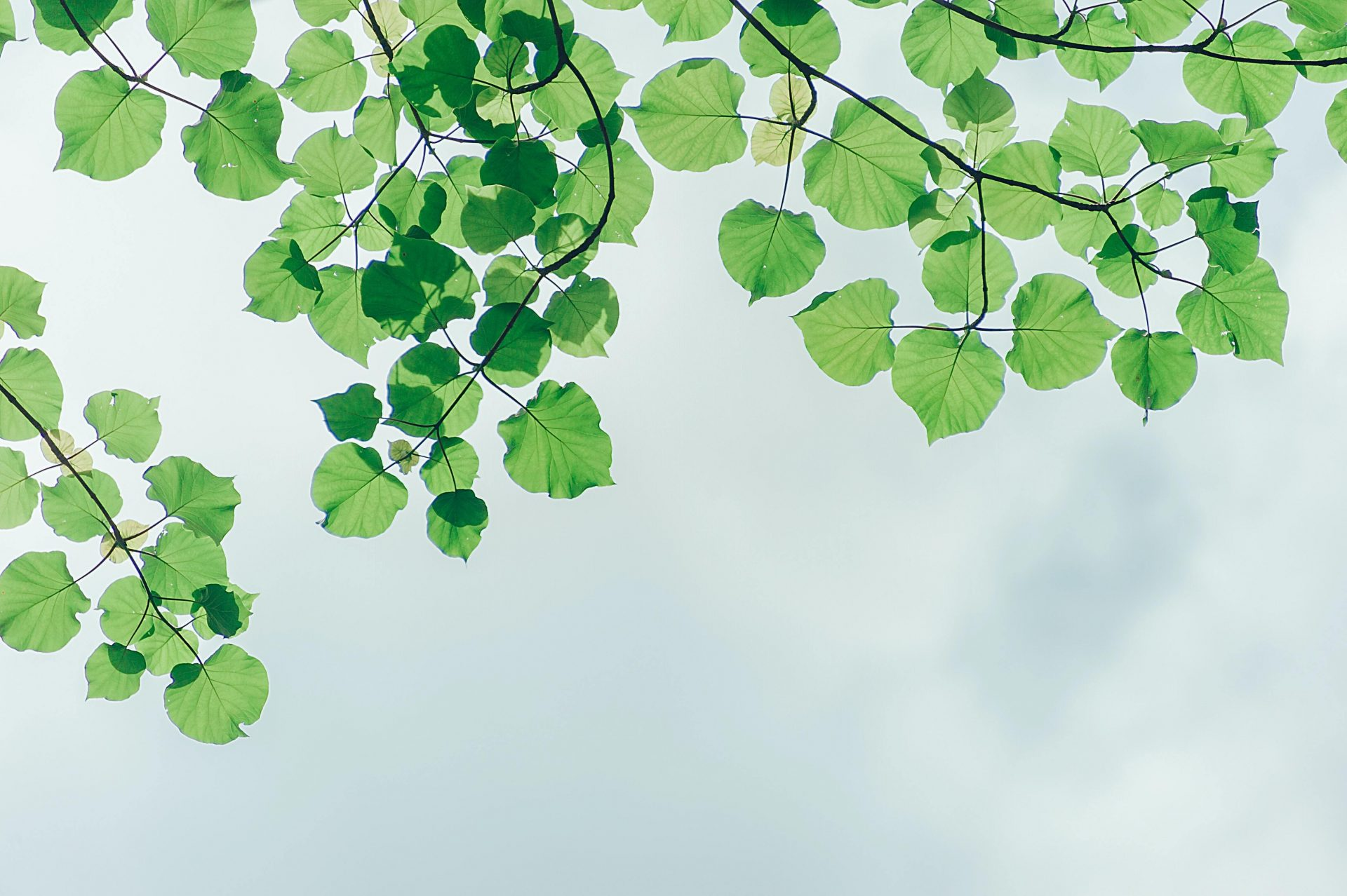 Photography Of Leaves Under The Sky 1131458
